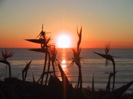 Papel de parede Estrelícias Ao Pôr-do-Sol