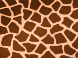 Papel de parede Estampa de Girafa