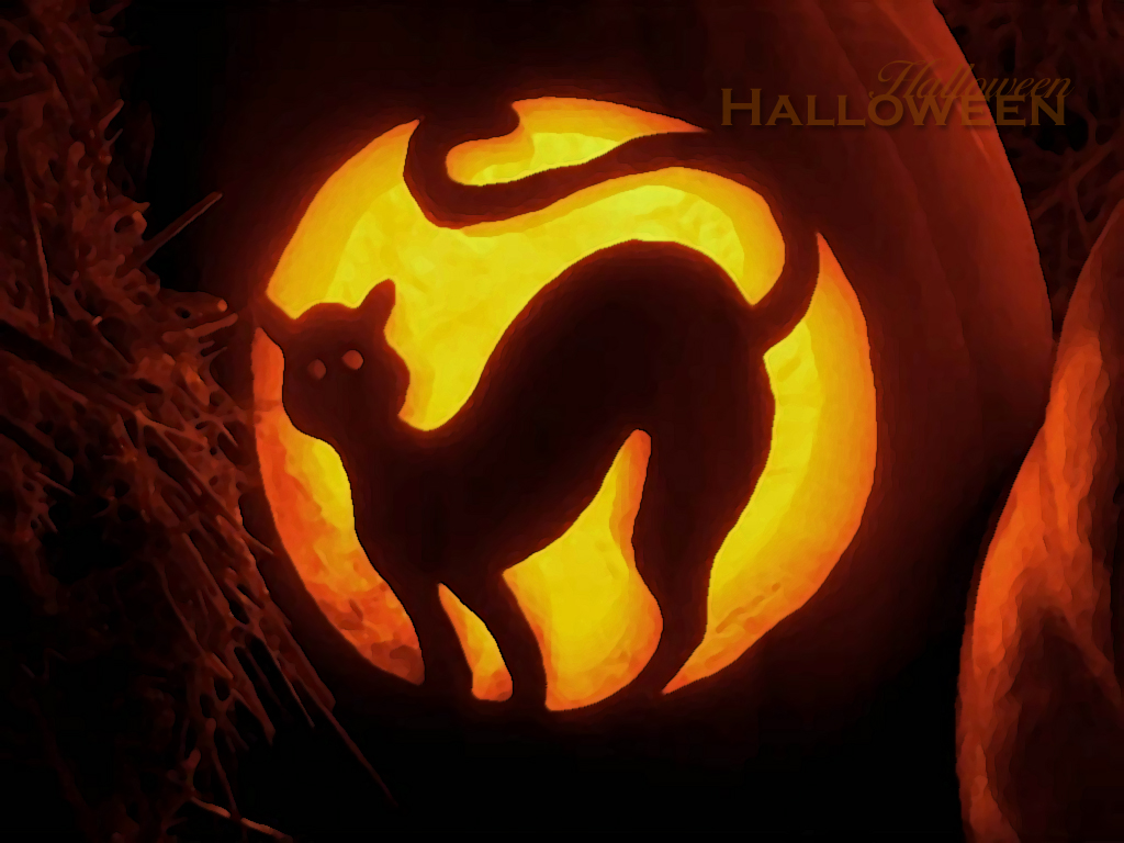 Papel de parede Gato Esculpido na Abóbora de Halloween para download gratuito. Use no computador pc, mac, macbook, celular, smartphone, iPhone, onde quiser!