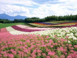 Papel de parede Japão – Hokkaido