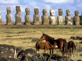 Papel de parede Ilha de Páscoa – Cavalos