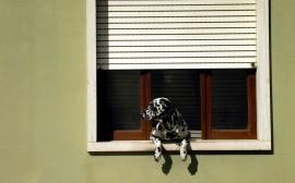 Papel de parede Janela – Cão