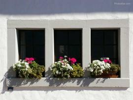 Papel de parede Janela – Com Flores