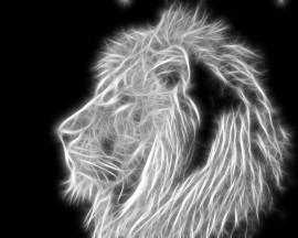 Papel de parede Leão – Luz