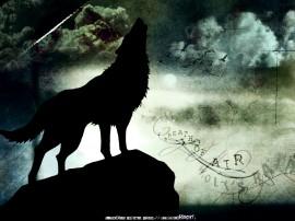 Papel de parede Lobo Uivando