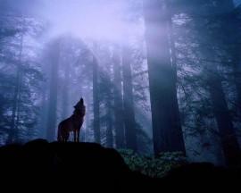 Papel de parede Lobo na Floresta