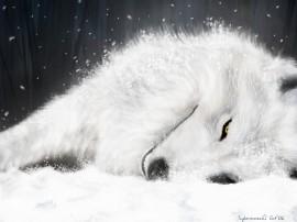 Papel de parede Lobo Branco
