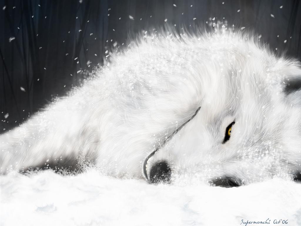 Papel de parede Lobo Branco para download gratuito. Use no computador pc, mac, macbook, celular, smartphone, iPhone, onde quiser!