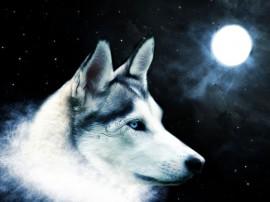 Papel de parede Lobo e a Lua