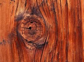 Papel de parede Madeira da Árvore