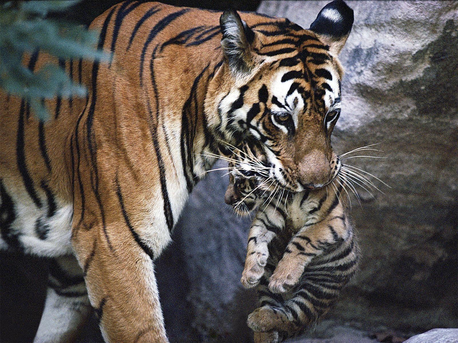 A tigresa do whatsapp atacando o cabaccedilo flakael esfrega a buceta na cara dele e ele rejeita - 3 2