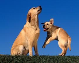 Papel de parede Mãe Bicho – Cachorro