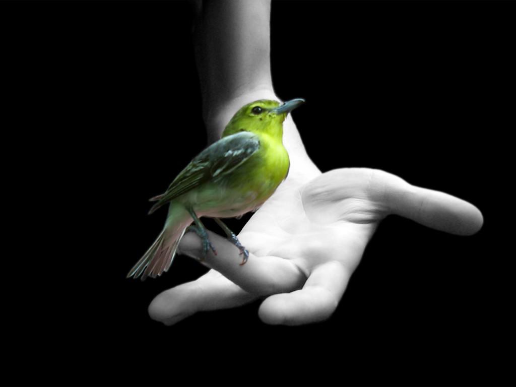 Papel de parede Mão Com Pássaro Verde para download gratuito. Use no computador pc, mac, macbook, celular, smartphone, iPhone, onde quiser!
