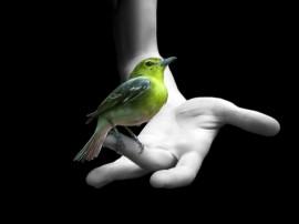 Papel de parede Mão Com Pássaro Verde