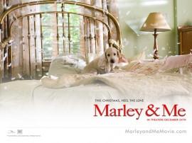 Papel de parede Marley e Bagunça