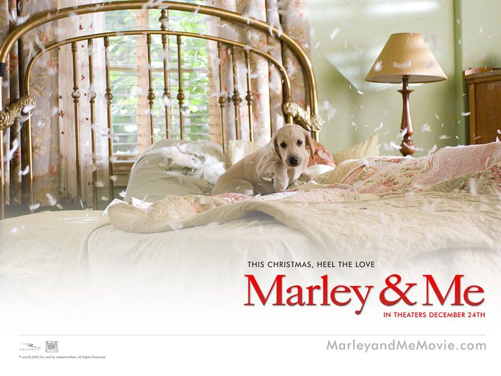 Papel de parede Marley e Bagunça para download gratuito. Use no computador pc, mac, macbook, celular, smartphone, iPhone, onde quiser!