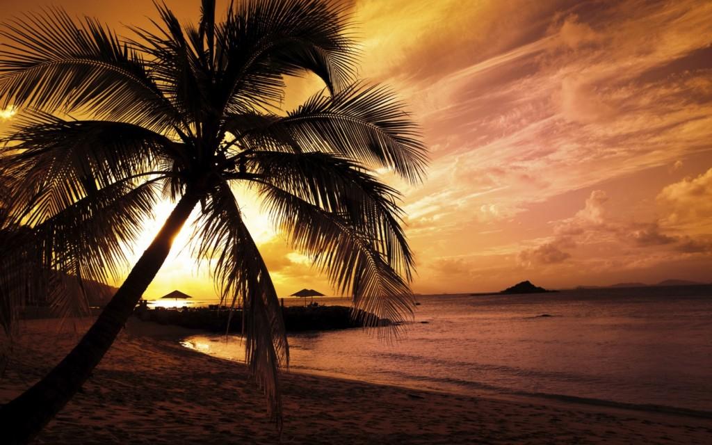 Papel de parede Pôr-do-sol na Praia: Palmeira para download gratuito. Use no computador pc, mac, macbook, celular, smartphone, iPhone, onde quiser!