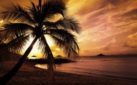 Papel de parede Pôr-do-sol na Praia: Palmeira