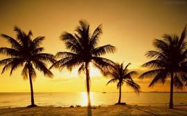 Papel de parede Pôr-do-sol na Praia: Especial