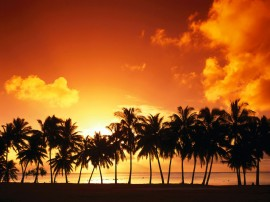 Papel de parede Pôr-do-sol na Praia: Tropical