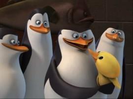 Papel de parede Pinguins de Madagascar – Pato