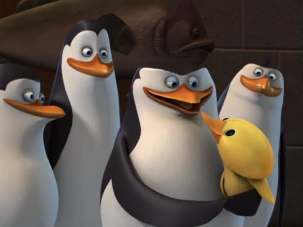 Papel de parede Pinguins de Madagascar – Pato para download gratuito. Use no computador pc, mac, macbook, celular, smartphone, iPhone, onde quiser!