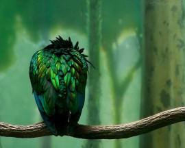 Papel de parede Papagaio Verde de Costas