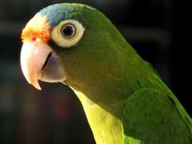 Papel de parede Pássaro Papagaio