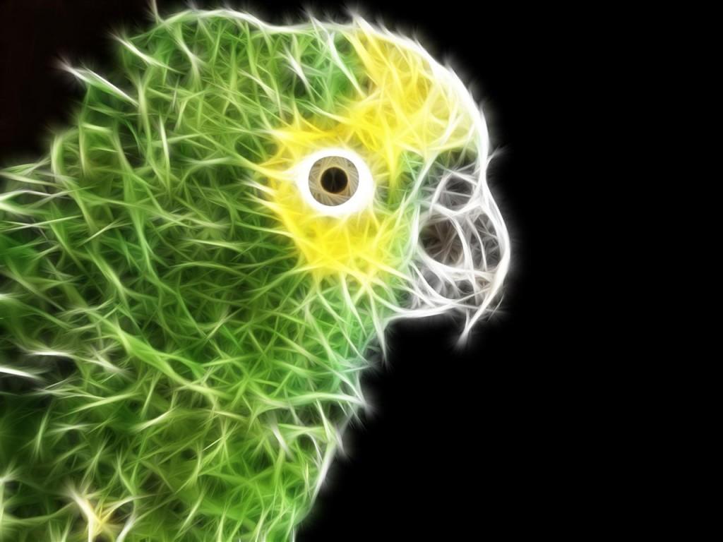 Papel de parede Papagaio em Arte Gráfica para download gratuito. Use no computador pc, mac, macbook, celular, smartphone, iPhone, onde quiser!