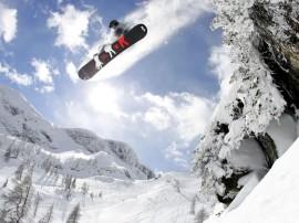 Papel de parede Snowboard – Sob as Árvores