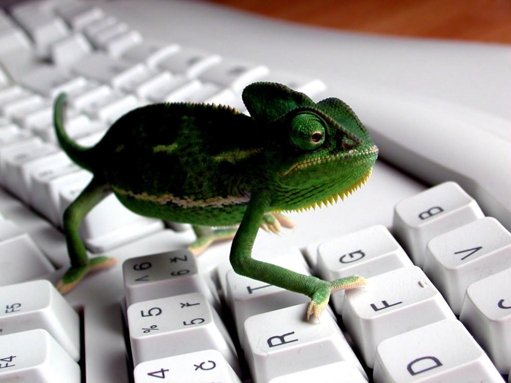 Papel de parede Teclado – Camaleão para download gratuito. Use no computador pc, mac, macbook, celular, smartphone, iPhone, onde quiser!