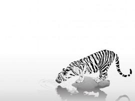Papel de parede Desenho de Tigre Tomando Água