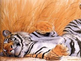Papel de parede Tigre Rolando no Chão
