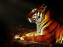 Papel de parede Desenho Gráfico de Tigre