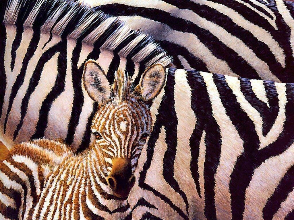 Papel de parede Zebra e Seu Filhote para download gratuito. Use no computador pc, mac, macbook, celular, smartphone, iPhone, onde quiser!