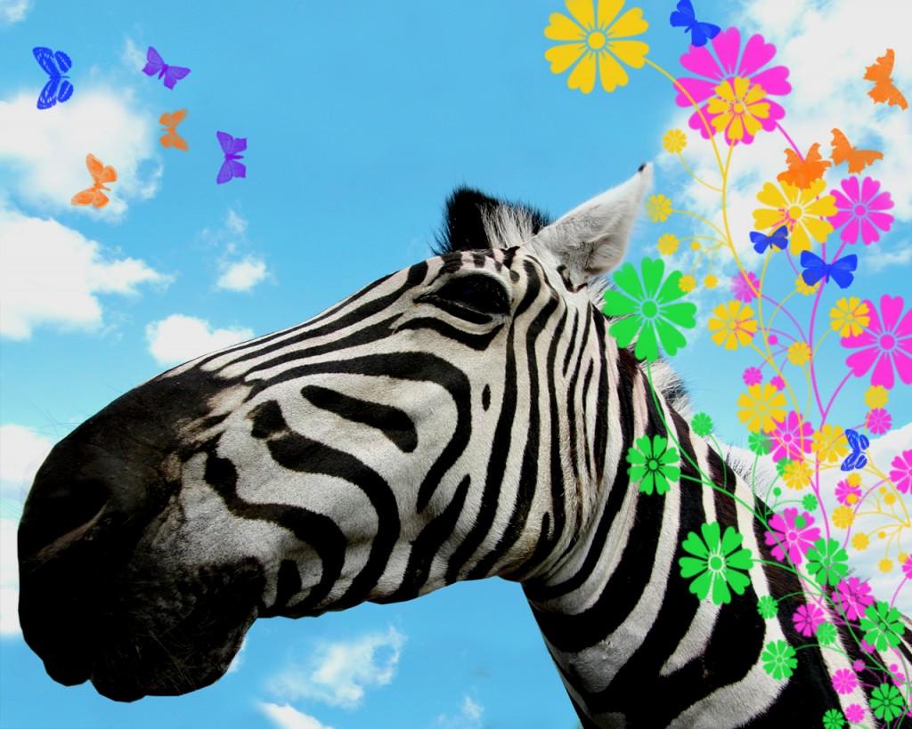 Papel de parede Zebra Florida para download gratuito. Use no computador pc, mac, macbook, celular, smartphone, iPhone, onde quiser!