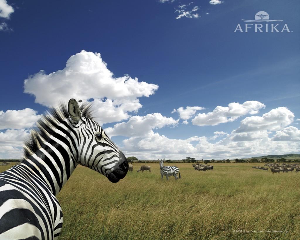 Papel de parede Zebra da África para download gratuito. Use no computador pc, mac, macbook, celular, smartphone, iPhone, onde quiser!
