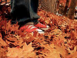 Papel de parede All Star – No Outono
