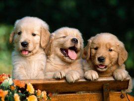 Papel de parede Amigo Cão