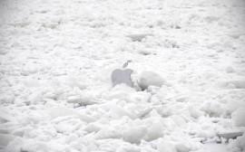 Papel de parede Apple na Neve
