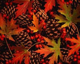 Papel de parede Cores do Outono