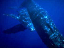 Papel de parede Baleia – Mar