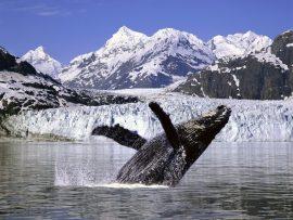 Papel de parede Baleia – Pulo