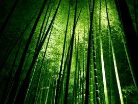 Papel de parede Bambú