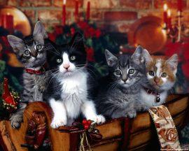 Papel de parede Baú de Gatos!