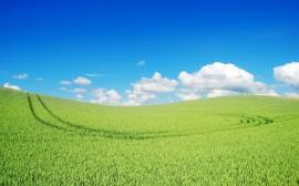 Papel de parede Campo Verde e Céu Azul