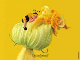 Papel de parede Bebê abelha – Anne Gedes