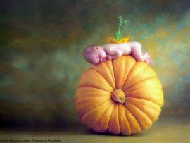 Papel de parede Bebê Abóbora – Anne Geddes
