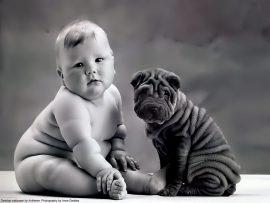 Papel de parede Bebê e Cachorro – Anne Geddes