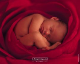Papel de parede Bebê na Rosa – Anne Geddes